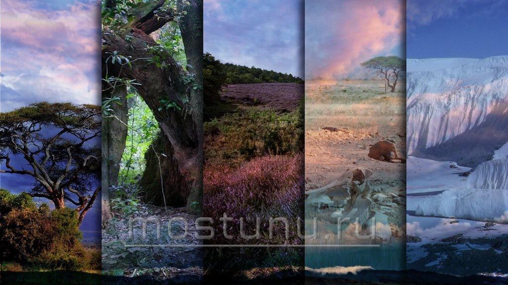 Климатические пояса Килиманджаро